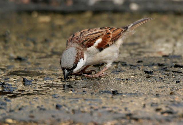 www.udanti.com: कहां गई आंगन में फुदकने ...