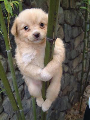 dog+on+tree.JPG