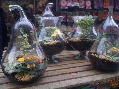 Amsterdam Flower Market, flowers, plants, succulents, cacti, garden, gardening, terrarium
