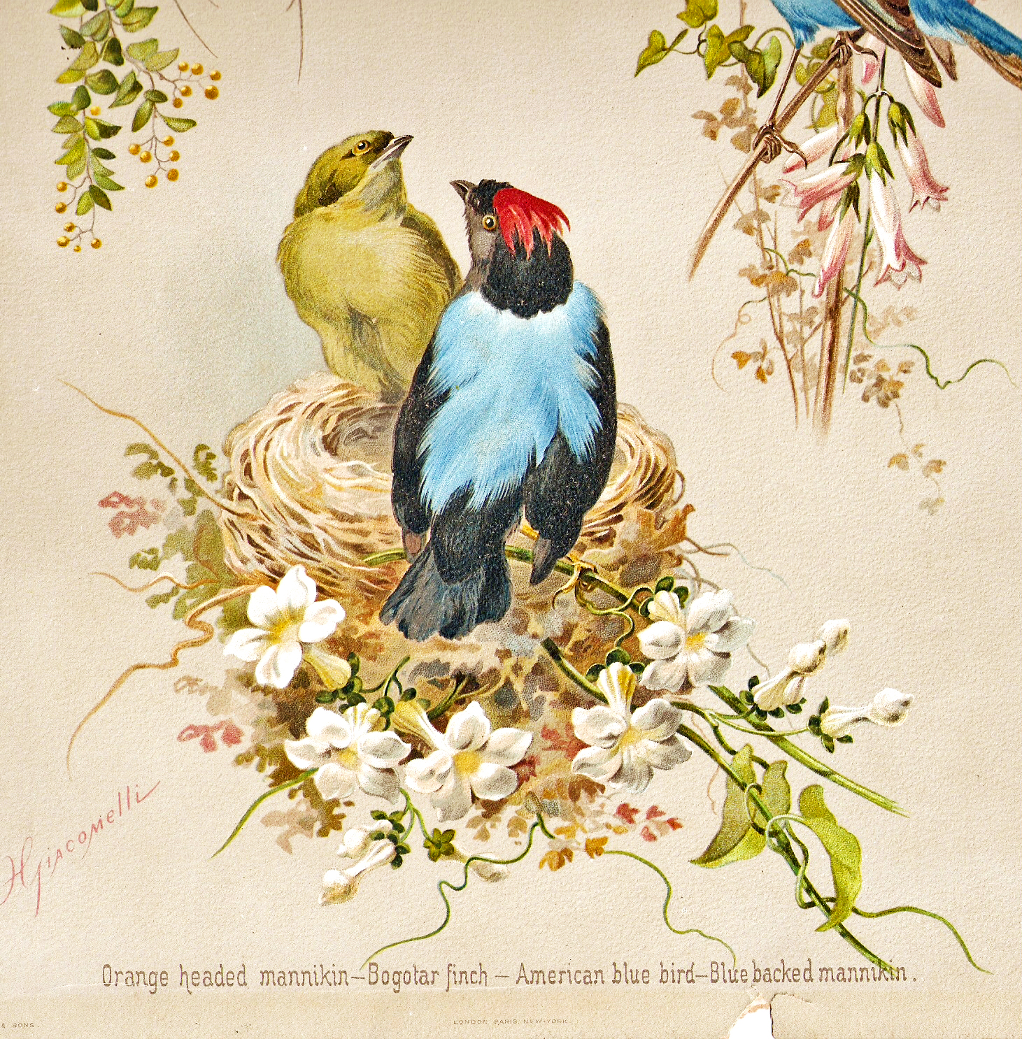 free clipart of vintage birds - photo #21