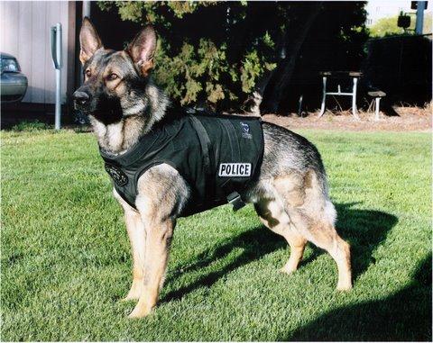 policedog Pitbulls Are Good Dogs