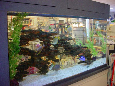 Tropical Fish Saltwater aquarium setup , Aquarium Maintenance and