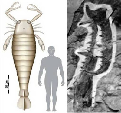Oblate Spheroid: 8 Foot Long Scorpion Found To Live In The Sea