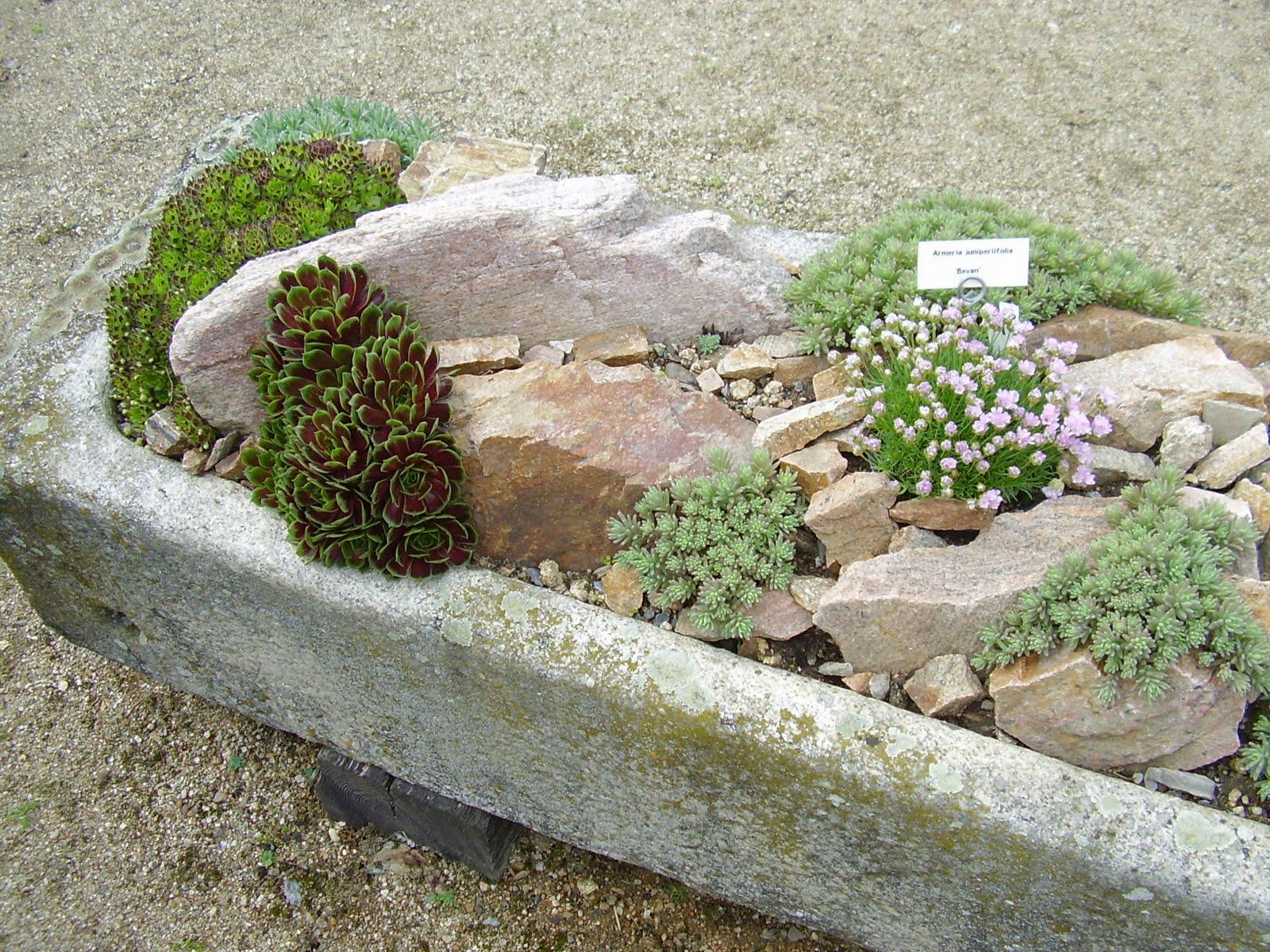 gardenless gardener: rock garden ideas on Small Garden Ideas With Rocks id=72045