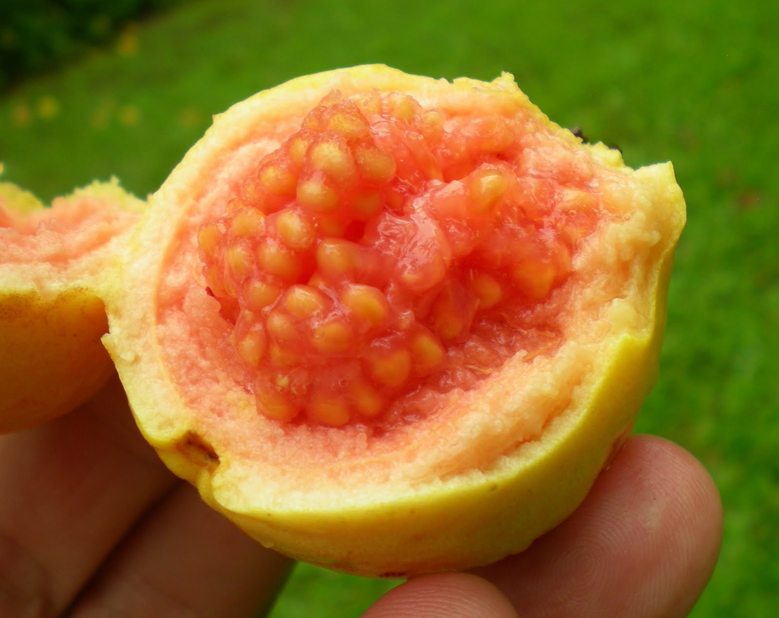 Greg's World On A Plate: Island Style, Tropical Fruits