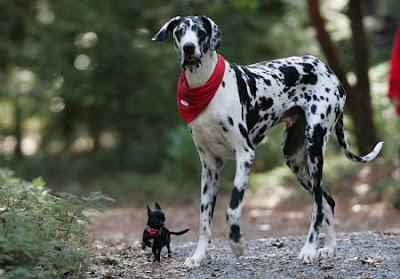 Worlds Tallest Dog