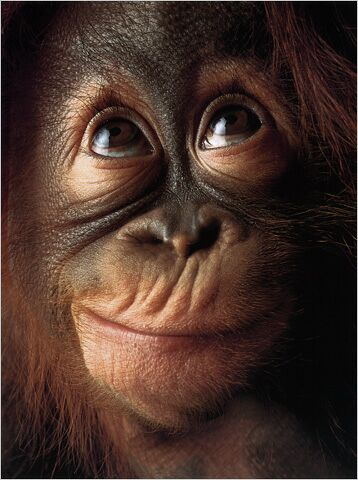 hilarious monkeys - photo #21