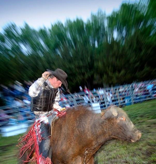 Dakotagraph Bull Riding Madison