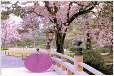https://i1.wp.com/3.bp.blogspot.com/_NnGhBcy6o04/Sr-4z_welII/AAAAAAAABx4/83qzsdW1hqE/s400/cerejeiras+em+flor+no+japao.jpg