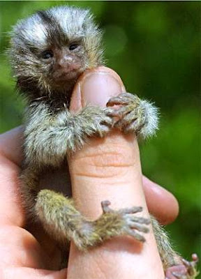Tiny Animals On Fingers 9