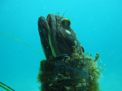 Man made objects provide hiding places for marine life