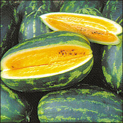 Mountain Sweet Yellow Watermelon