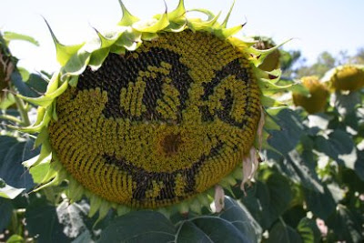 Artistic Sunflowers (8) 4