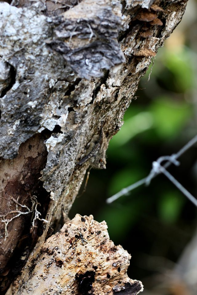 Amazing Animal Camouflage.