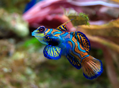 Beautiful colorful fish