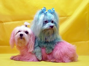Colorful Dogs (16) 15