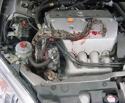 Snake in engine compartment (4) 3