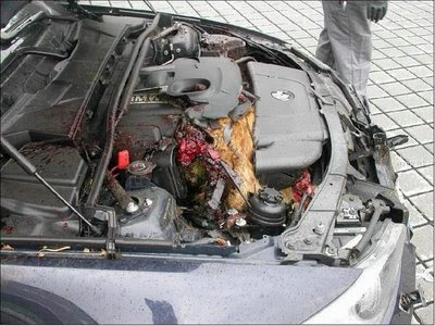 Deer in engine compartment (4) 2