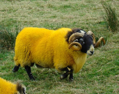Painted Sheep (7) 7