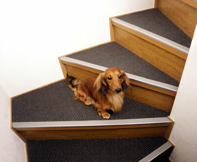 Dog Friendly Home Designs(18) 10