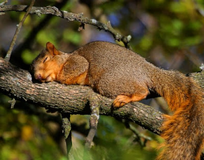 Cute Sleeping Animals (30) 11