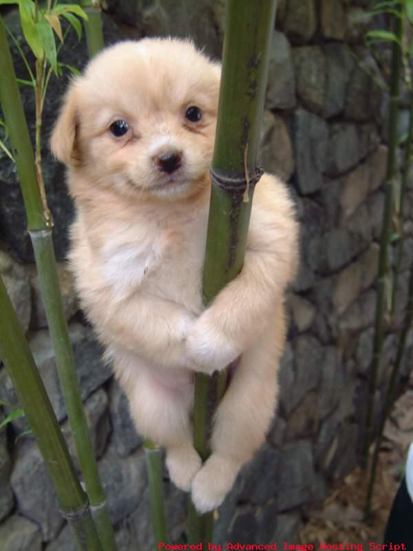 cute%2Bdoggy.jpg