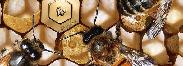 ouessant notre passion le miel d 39 ouessant fait le buzz. Black Bedroom Furniture Sets. Home Design Ideas