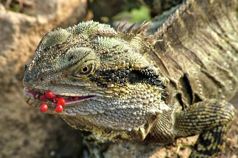 H D Reptiles Break comcs: Re...