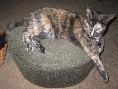 This is called tortie-tude.