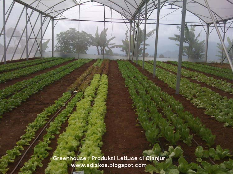 Greenhouse business plans