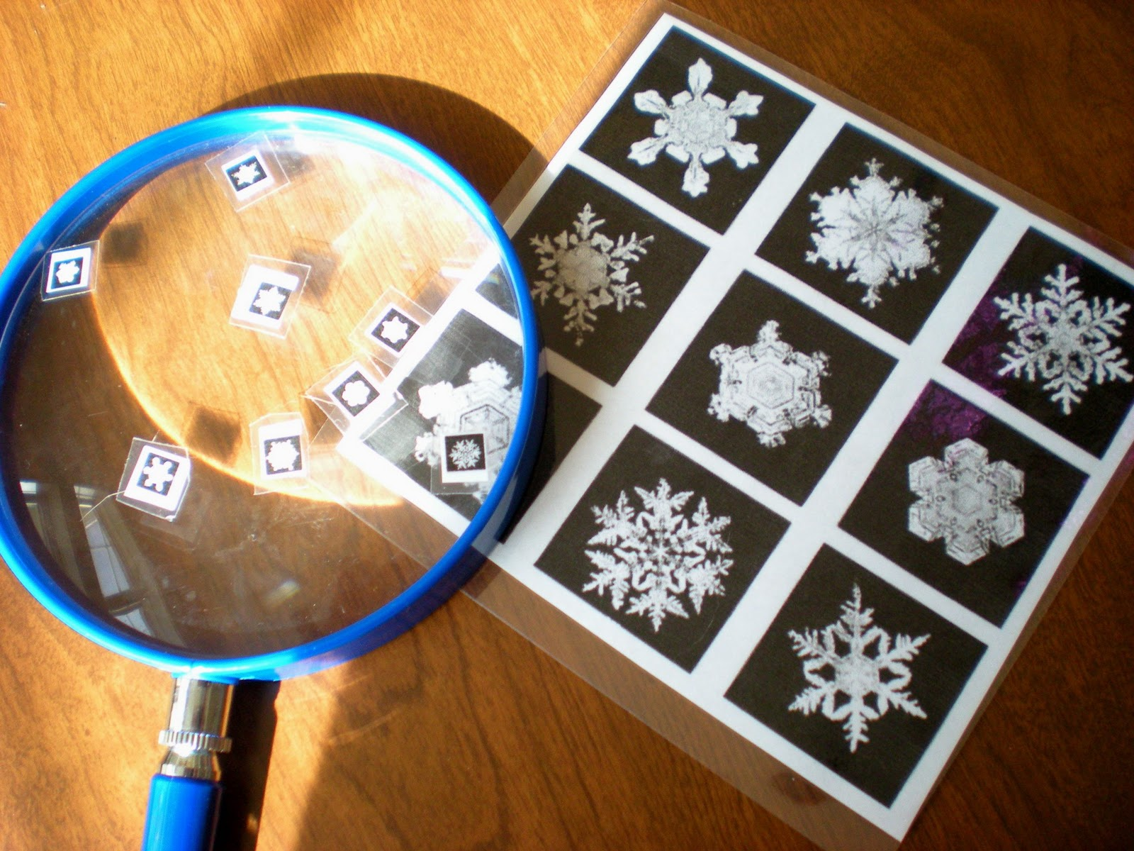 Sippy Cup Central Snowflake Bentley And Snowflake Fun