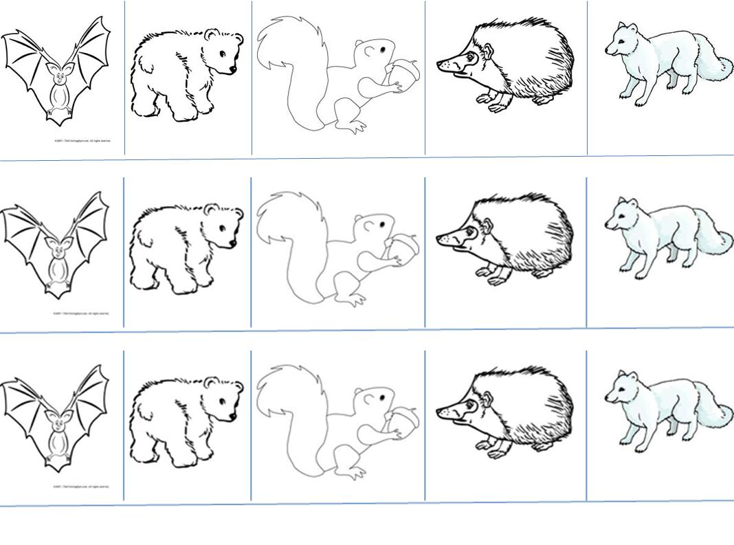 Elegant Free Hibernating Animals Coloring Pages