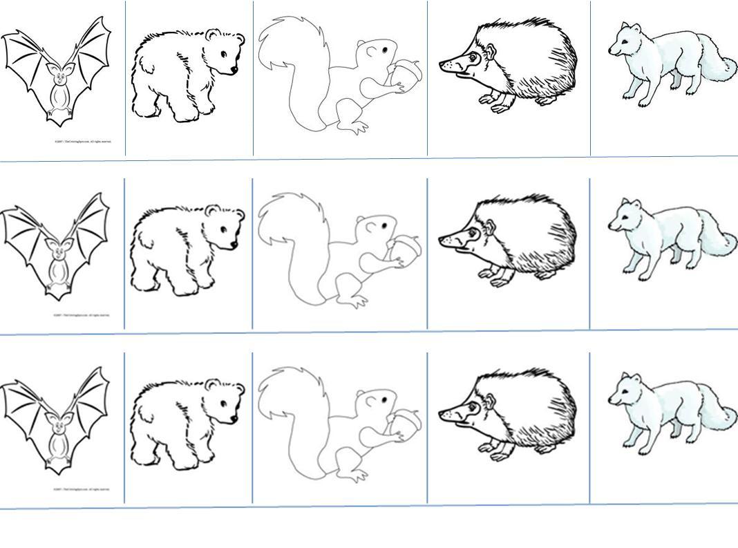 Elegant Free Hibernating Animals Coloring Pages