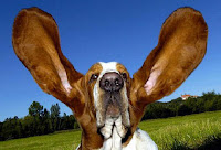 El oído de los perros Vs el de los humanos