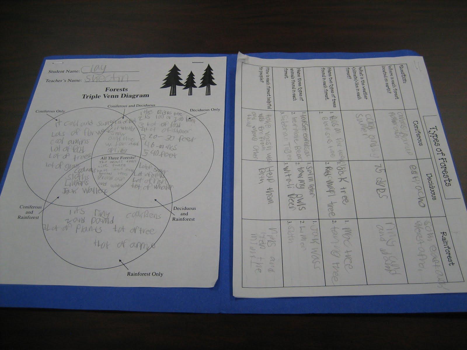 deciduous forest diagram whirlpool washing machine wiring allen reads second grade reseach unit
