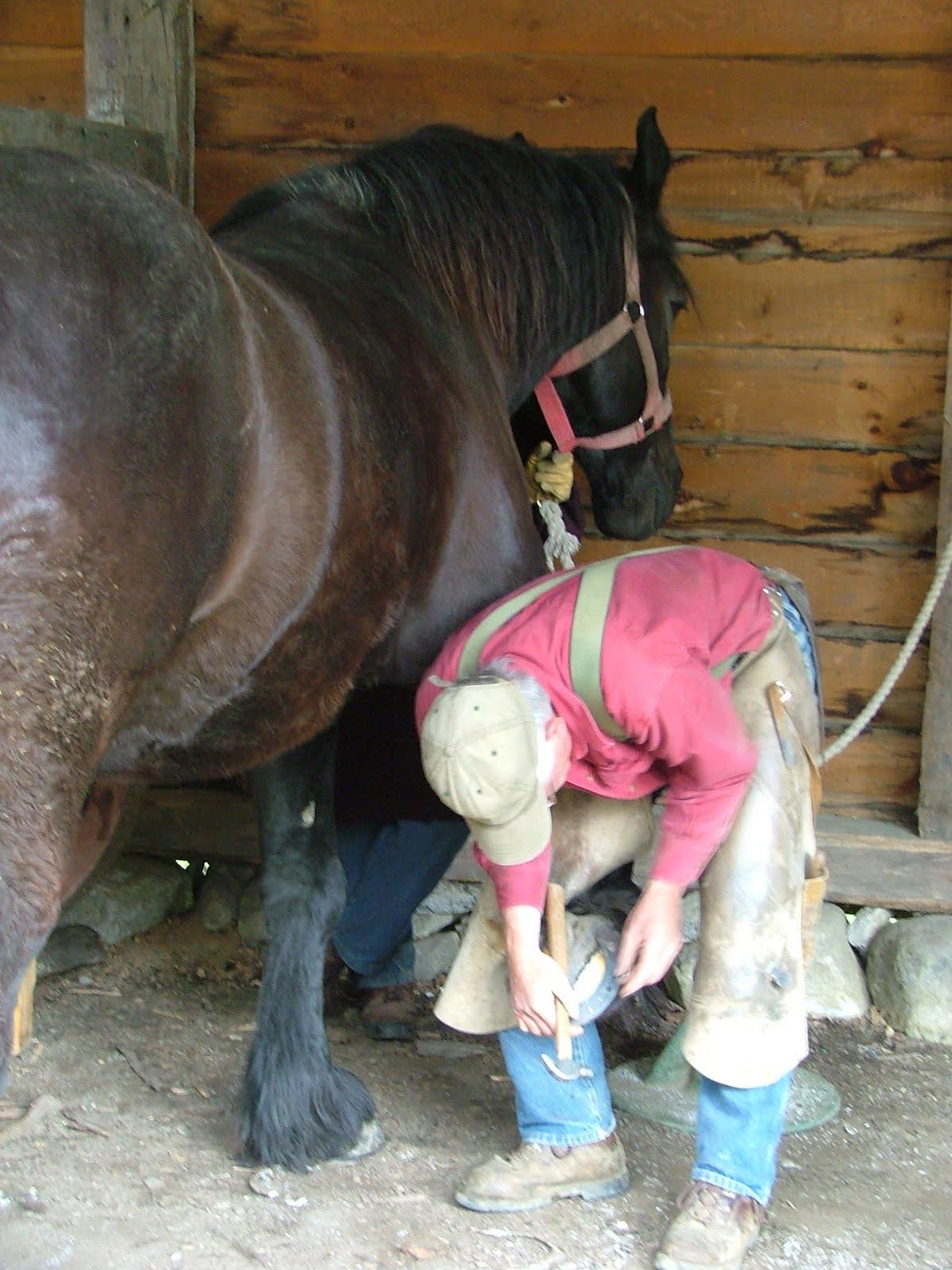 Horseshoeing