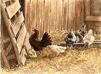 Chickens in a Barn-watercolor