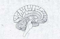 human-anatomy: Test #4 diagrams: ear, eye, glands, brain