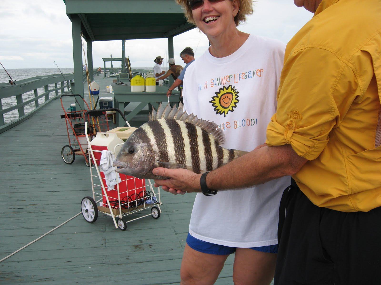 Saltwater Fishing Tips for the South: Sheepshead ...Saltwater Sheepshead Bait