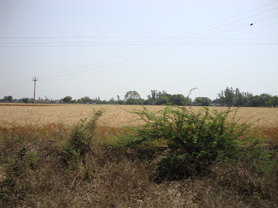 Side views of fields on the way to Temple