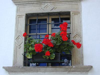 Il canto delle sirene una campana di vetro - I libri sono specchi riflettono cio che abbiamo dentro ...
