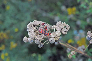 Blommor Vissnad Blomma Med Eldloss