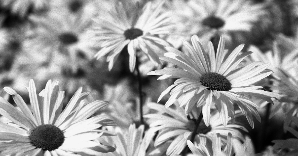 Best Wallpaper Photography Black And White: Black And