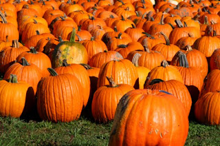 Image result for pumpkin season