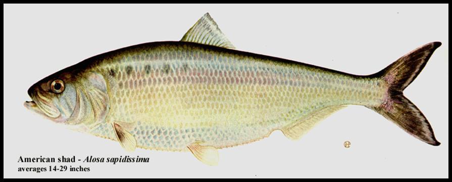Troutrageous Fly Fishing Tenkara Blog 07012010 08012010