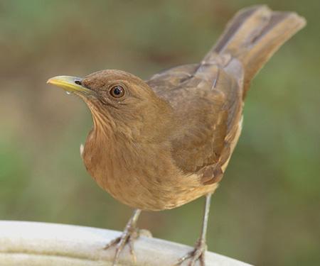ornitologia trabajo de ormitologia sobre las aves