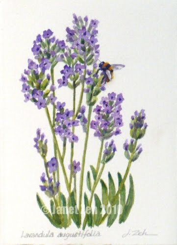 lavender painting - photo #24