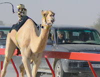A camel is closely followed by its owner