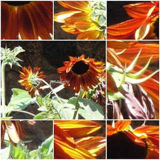 orange yellow sunflower