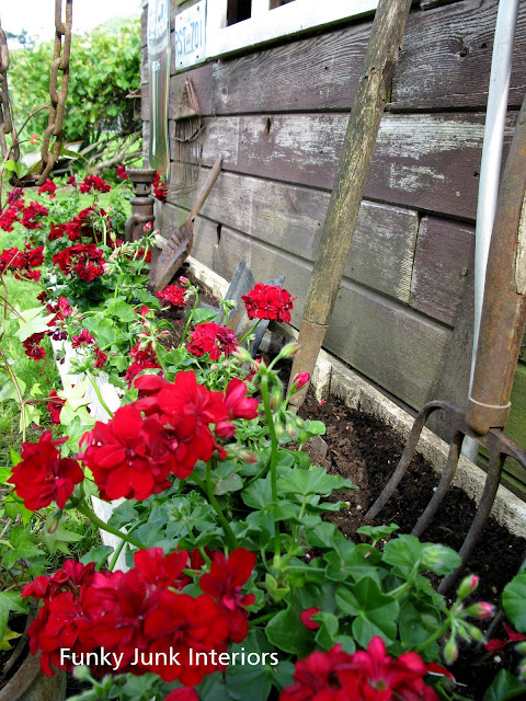 Rustic garden shed 4 - the reveal! / red geraniums in old crate planter